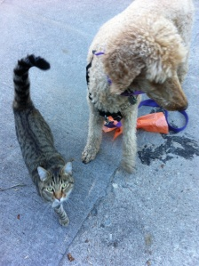 Sam's new friend.