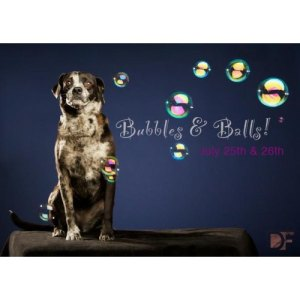 bubbles-balls-pet-photo-fundraiser-22