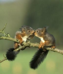 baby-squirrels