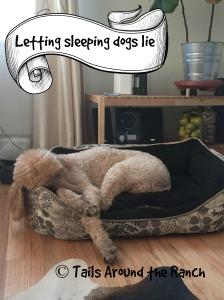 sleeping-dogs-lie